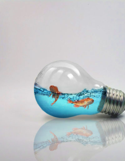 Photo d'un Photomontage avec une ampoule et des poissons